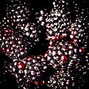 Blackberries Art - Blackberries by David Patterson