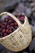 Baskets Photos - Blackberries In A Basket by David DuChemin