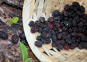 Fruit Basket Framed Prints - Blackberries Framed Print by Kristin Elmquist