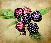 Blackberries Framed Prints - Blackberries Portrait Framed Print by Susan Isakson