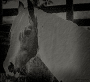 Pastureland Prints - Blacken Horse Profile Print by Debra     Vatalaro