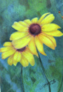 Texas Drawings - Blackeyed Susan by Beverly Fuqua