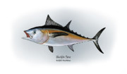 Gamefish Drawings Framed Prints - Blackfin Tuna Framed Print by Ralph Martens
