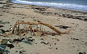 Driftwood Pyrography - Blair Witch at the Beach 2 by Robert Morin