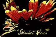 Blanket Prints - Blanket Flower Print by Chris Berry