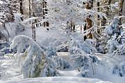 Andrea Kollo - Blanket of Snow