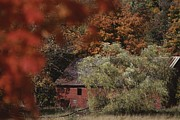Physiology Art - Blazing Autumn Color Surrounds A Barn by Roy Gumpel