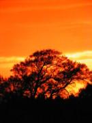 Blazing Oak Tree Print by Karen Wiles