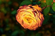 Orange Digital Art Originals - Blazing Rose by Lyle  Huisken