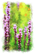 Violet Prints Framed Prints - Blazing Star - vignette Framed Print by Dan Carmichael