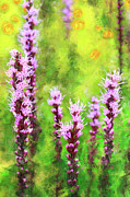 Violet Prints Acrylic Prints - Blazing Star  Acrylic Print by Dan Carmichael