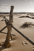 Sand Fences Acrylic Prints - Bleak Acrylic Print by Heather Applegate