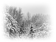 Snow Scene Prints - Bleak Print by Sharon Lisa Clarke