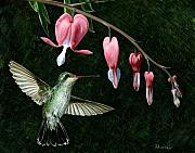 Bird Art - Bleeding Heart Humming by Brent Ander