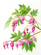 Hearts Painting Posters - Bleeding Hearts #1 Poster by Sharon Freeman