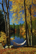 New Hampshire Fall Foliage Framed Prints - Bliss - New England Fall Landscape hammock Framed Print by Jon Holiday