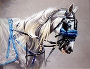 Harness Racing Posters - Blizzard Babe Poster by Carrie L Lewis