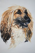 Afghan Hound Paintings - Blonde by Susan Herber