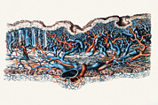 N.h. Prints - Blood Vessels In Stomach Wall Print by Mehau Kulyk
