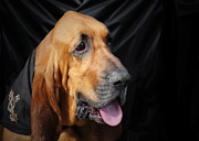 Portraits Tapestries Textiles Metal Prints - Bloodhound - Governed by a world of scents Metal Print by Christine Till