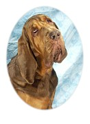 Blood Hound Framed Prints - Bloodhound 371 Framed Print by Larry Matthews