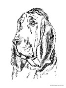 Sizes Drawings Posters - Bloodhound-Art-Portrait Poster by Gordon Punt