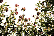 Blossoming Framed Prints - Blooming Above Framed Print by Sumit Mehndiratta