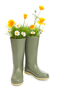 Seedlings Posters - Blooming Wellington Boots Poster by Christopher Elwell and Amanda Haselock