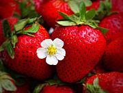 Juicy Strawberries Metal Prints - Blossom Among Strawberries Metal Print by Tracie Kaska
