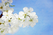 HJBH Photography - Blossom