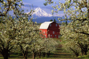 Farm Scenes Prints - Blossom Time Print by Eggers   Photography