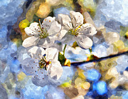 Fruit Tree Art Photos - Blossoming cherry and morning sunlight watercolor by Aleksandr Volkov