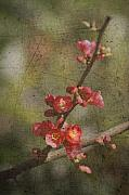 Blossoms Metal Prints - Blossoms Metal Print by Rebecca Cozart
