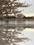 Cherry Blossom Prints - Blossoms Reflection Print by Frank Garciarubio