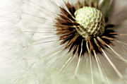 Bob Daalder Art - Blowball... by Bob Daalder