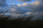 Dunes Prints - Blowing in the Wind Print by Timothy Johnson