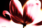 Floral Greeting Card Posters - Blowing Kisses Tulip Poster by Jayne Logan