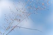 Jenny Rainbow - Blue Air. Grass Art