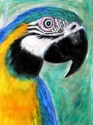 Gold Pastels Posters - Blue and Gold Macaw Poster by Mike Paget