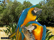 Blue And Gold Macaw Posters - Blue and Gold Macaws Poster by Methune Hively