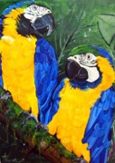 Parrot Paintings - Blue and Gold Macaws by Una  Miller