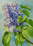 Watercolor Painting Originals - Blue and Lavender Lilacs by Sharon Freeman