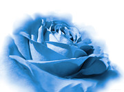Blue Flowers Photos - Blue and White Rose Flower by Jennie Marie Schell