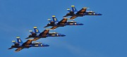 Dog Fights Prints - Blue Angels 4 Print by Cindy Fullwiler