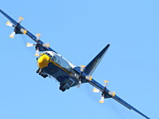 Jato Acrylic Prints - Blue Angels Fat Albert C130T Hercules . 7D7912 Acrylic Print by Wingsdomain Art and Photography
