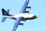 Jet Posters - Blue Angels Fat Albert Poster by Wingsdomain Art and Photography