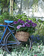 Cheri Randolph Prints - Blue Bike Print by Cheri Randolph