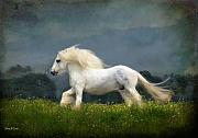 White Horses Photo Prints - Blue Billy C1 Print by Fran J Scott