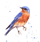 Bluebird Metal Prints - Blue Bird blue bird painting Metal Print by Alison Fennell