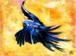 Flight Mixed Media Posters - Blue bird in flight Poster by Rashmi Rao